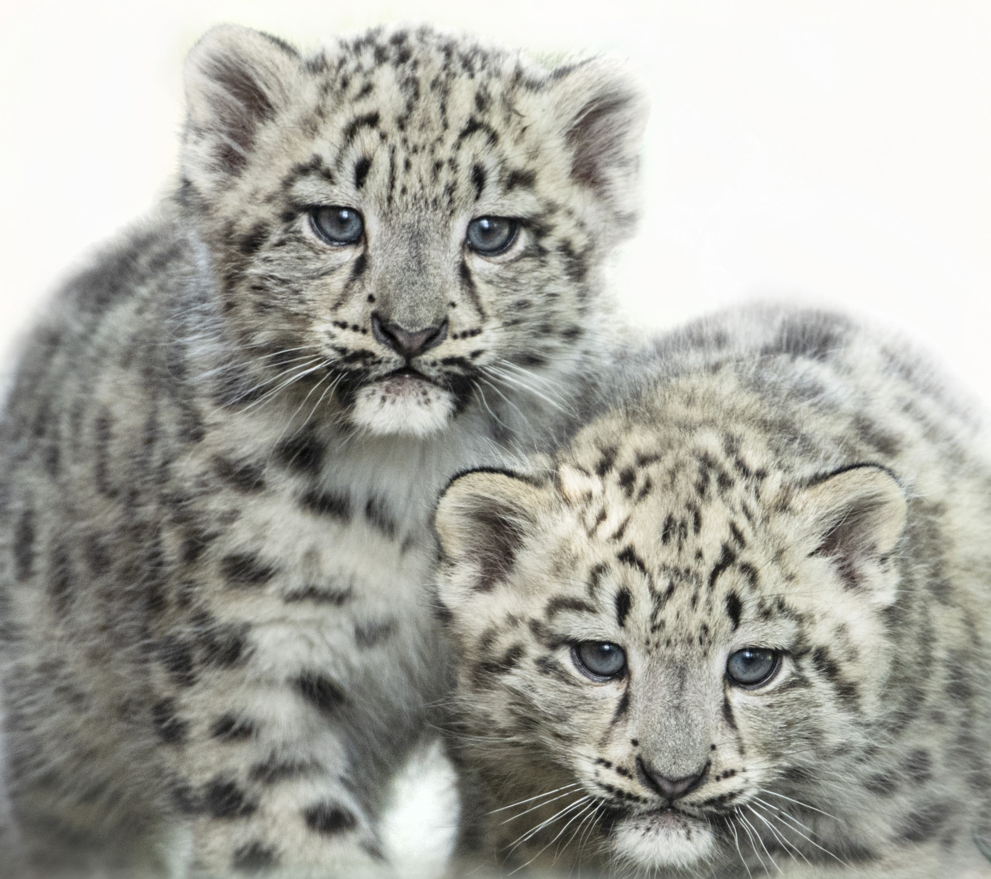 Big Cat Sanctuary felines
